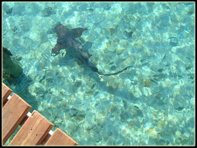 Staniel Cay, Exuma, Bahamas - 1 866 FLY ISLANDS - Air